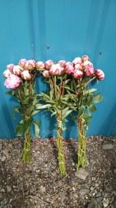 Pink Peonies Sarah Burnhart