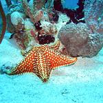 Reeffish vol1.01 (52)