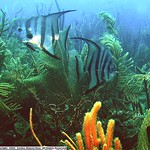 Reeffish vol1.01 (32)