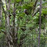 05 Viajefilos en Australia, Fraser Island 001