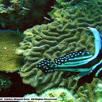 Reeffish vol1.01 (25)