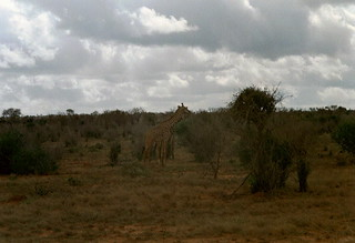 Kenia 2000 - 067
