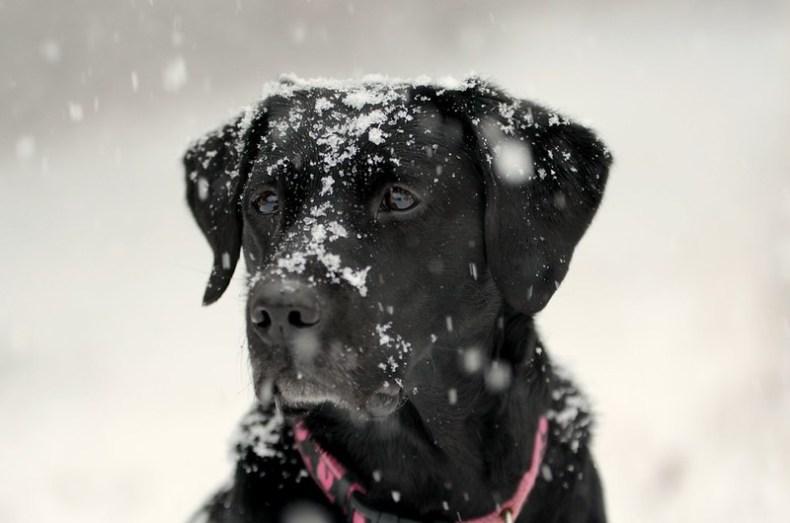 black dog & white stuff