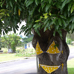 09 Viajefilos en Australia, Yungaburra 003