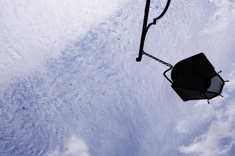 Vol d'oiseaux dans une mer de nuages