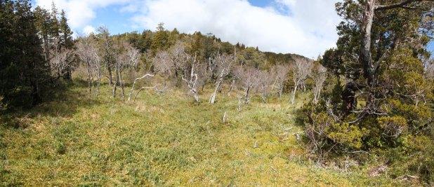 Flora de las turberas del Parque Nacional Alerce Costero