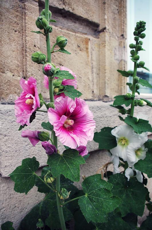 Fleurs de rue