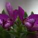 botanischer garten basel-5485.jpg