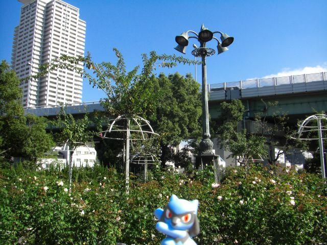Riolu in near Umeda and Temmabashi, Osaka, Osaka 19 (Nakanoshima Park)