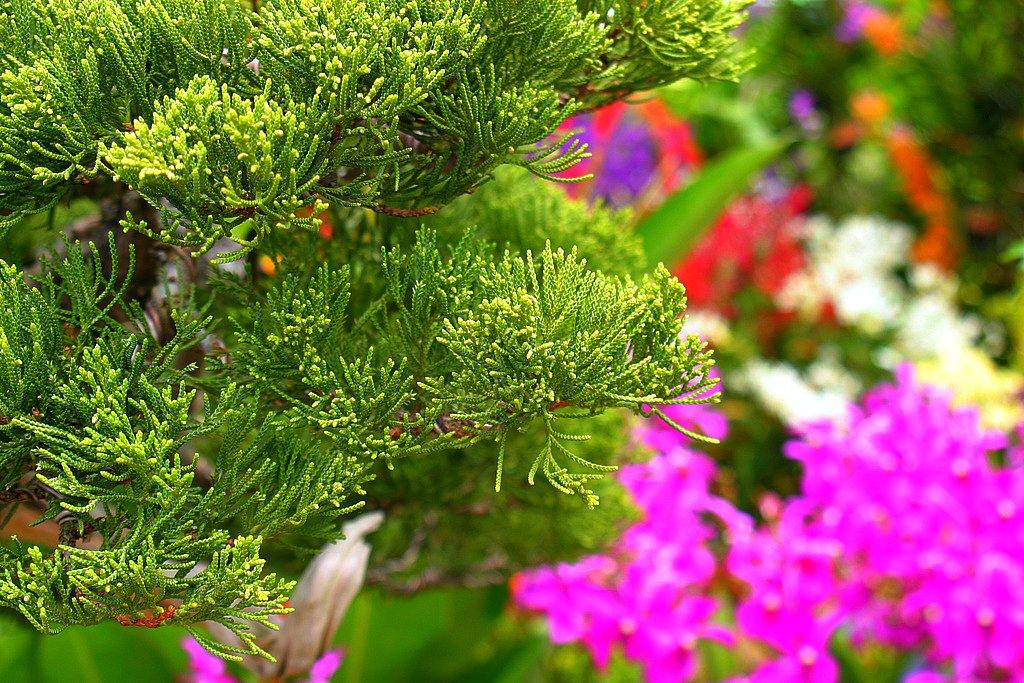 Pesta Flora 2010 Najib Harif Flickr