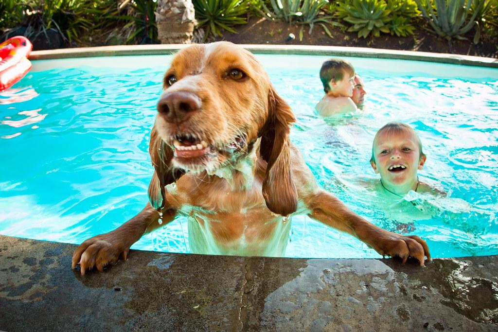 Everyone went swimming