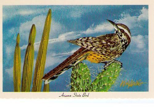 Arizona State Bird Cactus Wren Mary Ellen Flickr