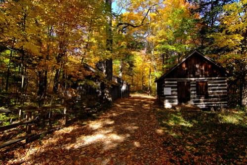 Sheppard's Bush Autumn