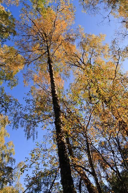 Autumnal Trees near Loch an Eilein