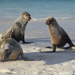 Viajefilos en La Espanola, Galapagos 097