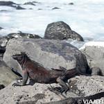 Viajefilos en La Espanola, Galapagos 060