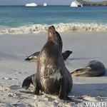 Viajefilos en La Espanola, Galapagos 099