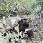 Viajefilos en San Cristobal, Galapagos 056