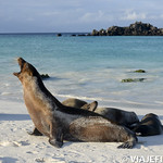 Viajefilos en La Espanola, Galapagos 106