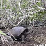 Viajefilos en San Cristobal, Galapagos 061