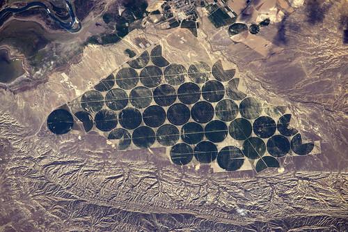 Perfectly geometrical fields
