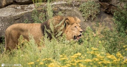 Berlin Zoo - 0101