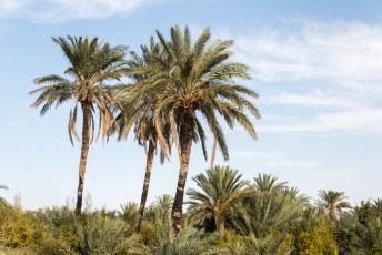 We liepen door een palmbomenbos richting de waterbron.