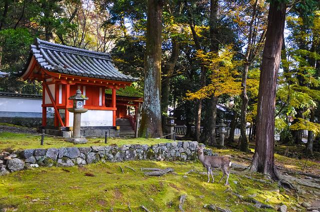 Tamukeyama Hachiman-gū Shrine手向山八幡宮