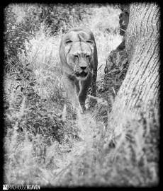 Berlin Zoo - 0121