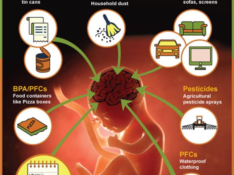 Chemical threat to brain development
