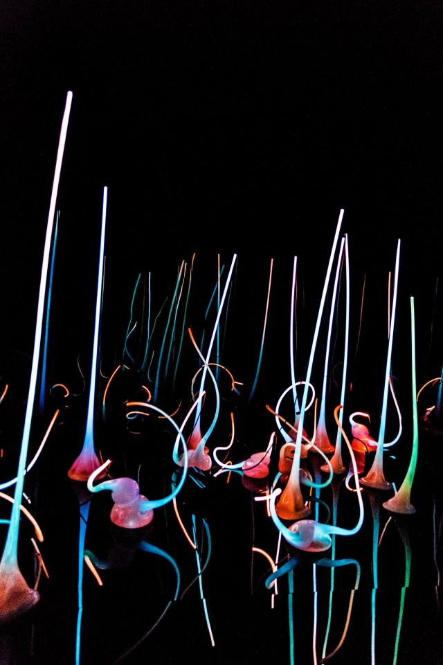 glowing neon sculptures at the Chihuly Gardens & Glass