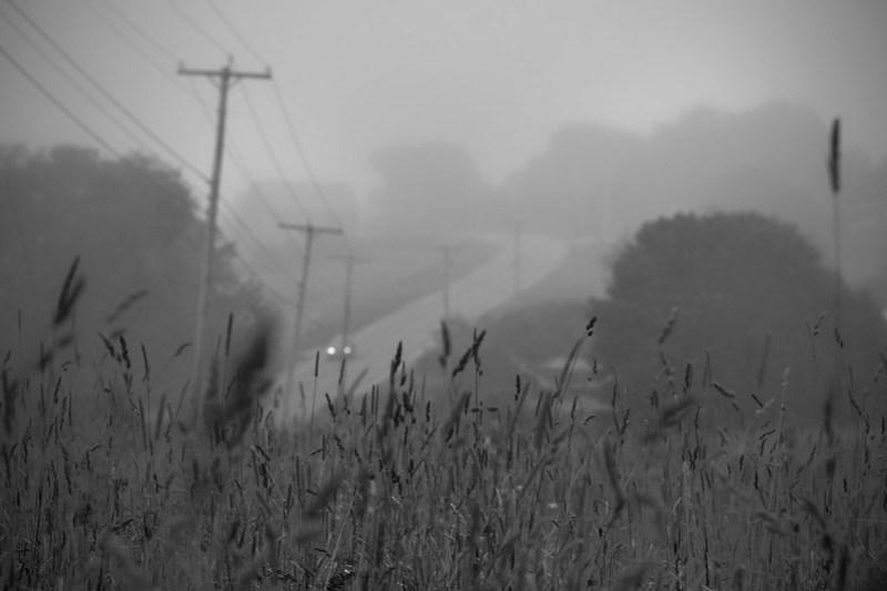 through the grasses, roadway, powerlines, fog, dusk, route 131 south, Saint George, Maine, Nikon D3300, mamiya sekkor 80mm f-2.8, 7.16.17