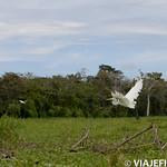 Viajefilos en la Amazonia, Peru 020