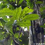 Viajefilos en la Amazonia, Peru 049