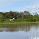 Viajefilos en la Amazonia, Peru 018