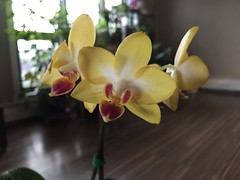 Orchid photos 2017