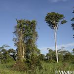Viajefilos en la Amazonia, Peru 141