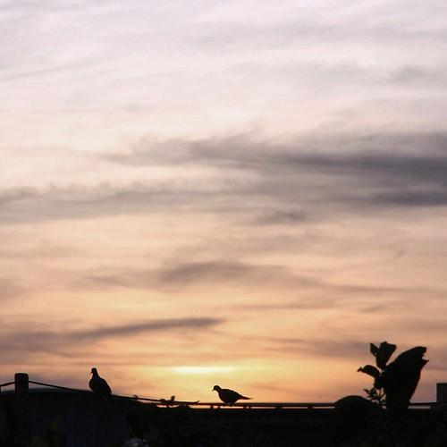 . . Today's song 幾度夕陽紅 ♪ 時光留不住 春去己無踨 潮來又潮往 聚散苦匆匆 往事不能忘 浮萍各… | Flickr