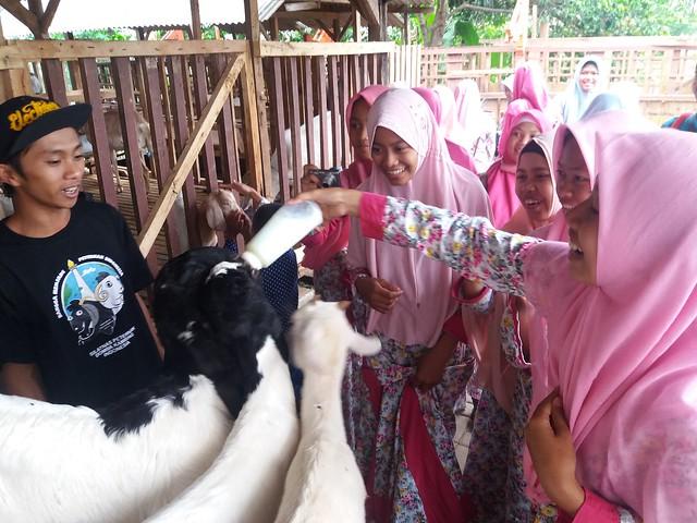 Kunjungan ke peternak kambing, Kota Batu
