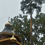 2017 10 08 - temple and pine