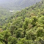 08 Viajefilos en Australia, Mamu Tropical Skywalk 005