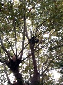 Chengdu Giant Panda Reserve