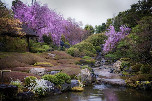 Sakura in Haradani-en