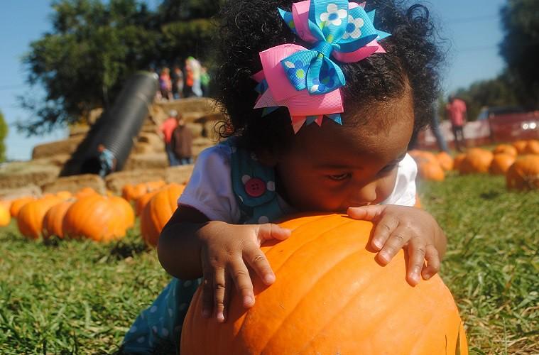 pumpkinpatchembed