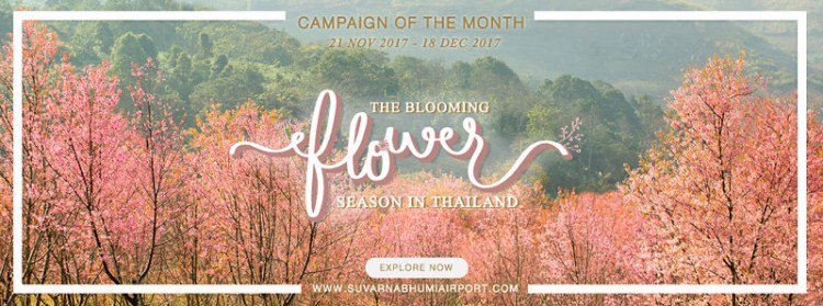 The Blooming Flower Season in Thailand