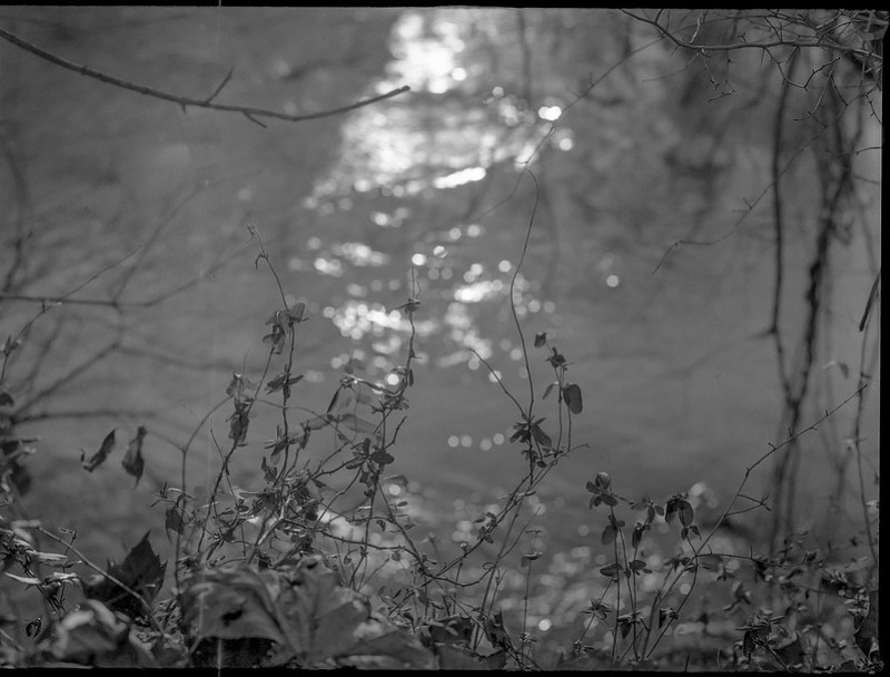 riverside, plant forms, reflections, Carrier Park, French Broad River, Asheville, North Carolina, Mamiya 645 Pro, mamiya sekor 80mm f-2.8, 12.30.17