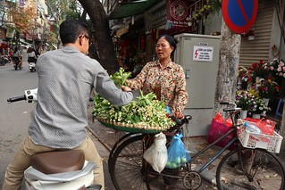 Selling Grapefruit flowers