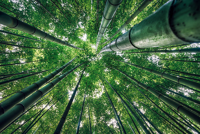 Taehwa Bamboo