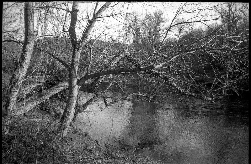 riverside, trees, one overhanging, French Broad River, Carrier Park, Asheville, North Carolina, Olympus XA, Rollei RXP 400, Moersch Eco Film Developer, 12.30.17