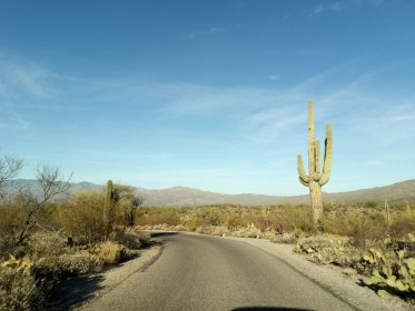 Cactus Forest Drive